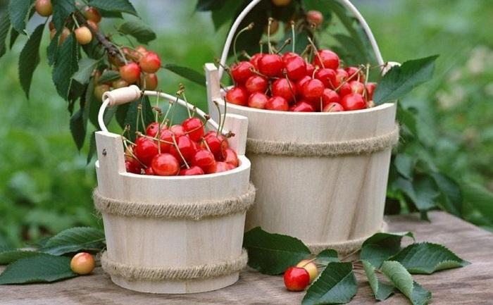 Beneficiile consumului de cireşe