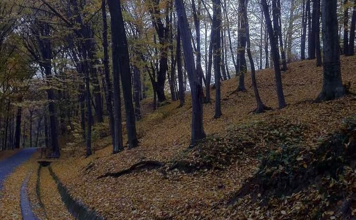 Pădurea Trivale, cândva mândrie a oraşului Piteşti.
