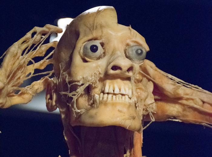 Cadavre plastinate din China, expuse la Cluj
