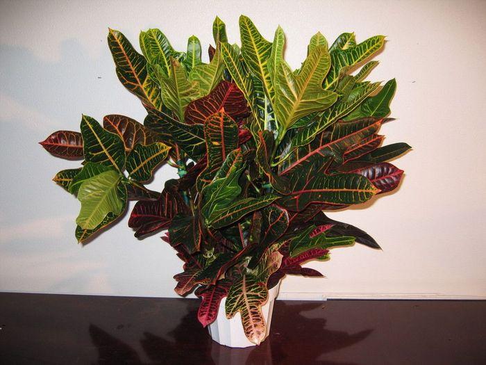 Cele Mai Frumoase Plante Decorative Cu Frunze Epoch Times