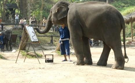 Elefant care desenează mai bine decât unii oameni