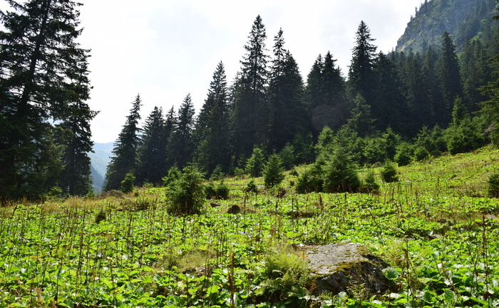Pădure de munte