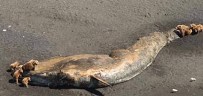 Balene moarte în golfurile din Alaska