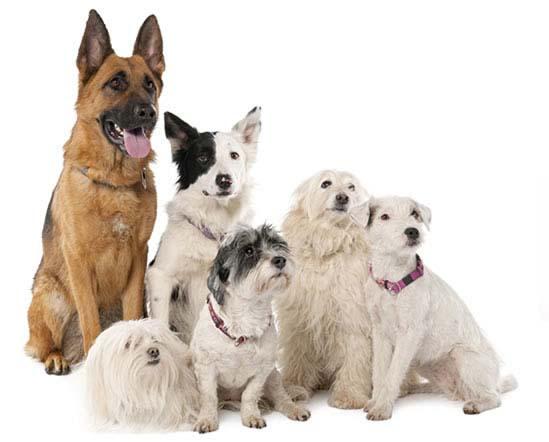 Mituri despre câini