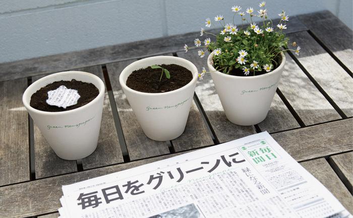 """După ce l-aţi citit, ziarul poate fi plantat într-un ghiveci sau în grădina din faţa casei, îi turnaţi apă la """"rădăcină"""", iar el va încolţi."""
