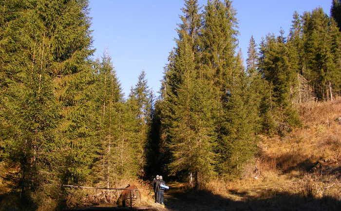 Parcul naţional Călimani.