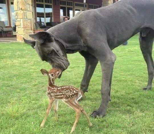 Prietenii uimitoare între animale