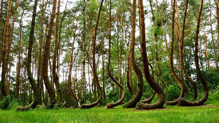 Pădurea Strâmbă, situată în powiatul Gryfino din Pomerania Occidentală, Polonia