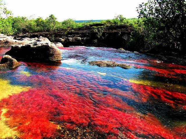 """Caño Cristales,""""Râul celor cinci culori"""" se află în Sierra de la Macarena, Columbia"""