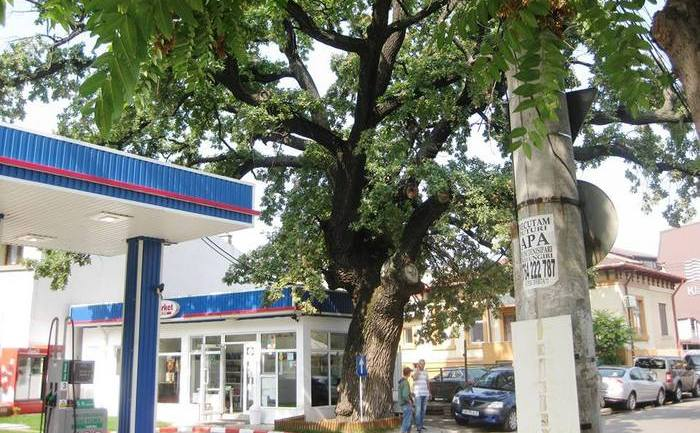 Stejarul din strada Horei 21