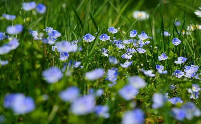 Flori medicinale