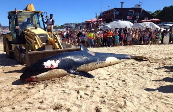 Balena care a murit pe plaja din Plettenberg a ingerat mult mai multe deşeuri umane decât mâncare adevărată.