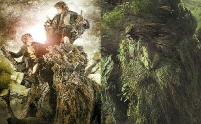 Copacii misterioşi  din Ecuador amintesc vizitatorilor de creaţiile lui J.R.R. Tolkien.