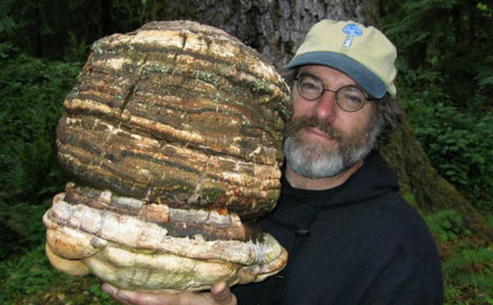 """Micologul Paul Stamets a înregistrat un brevet pentru un nou pesticid natural numit """"Pesticid inteligent"""". Descoperirea este un dar făcut de o ciupercă """"magică"""" capabilă să lupte împotriva a peste 20.000 de tipuri de insecte."""
