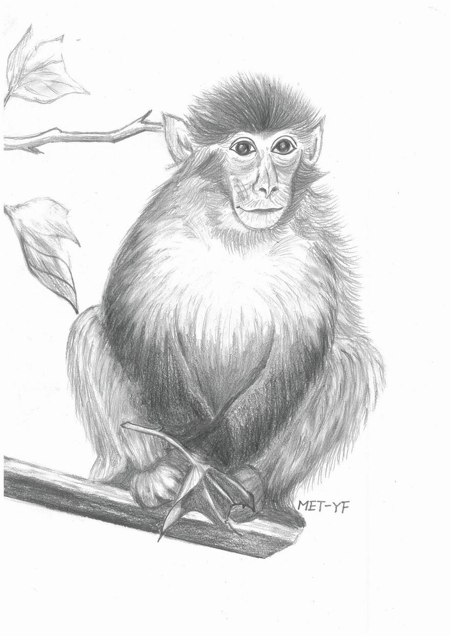 Anul Maimuţei