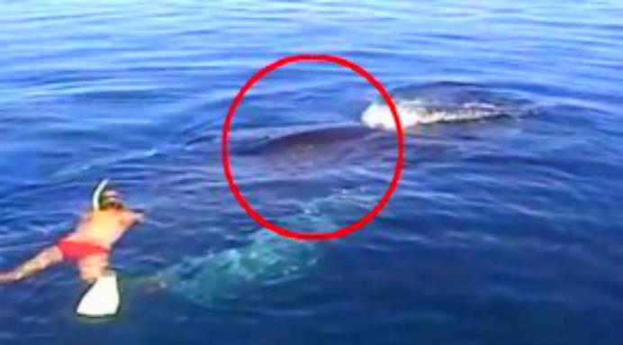 Un om salvează o balenă prinsă într-o plasă de pescuit.