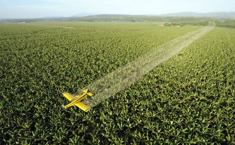 Un avion aruncă fungicide peste o plantaţie de banane din Filipine, 22 aprilie 2008.