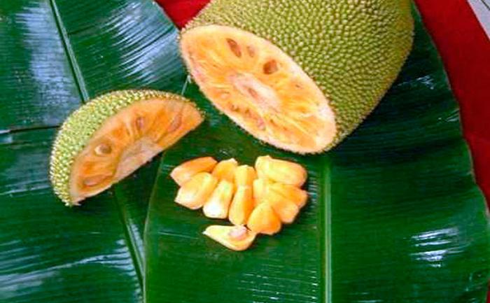 Fruct de pâine (Breadfruit)