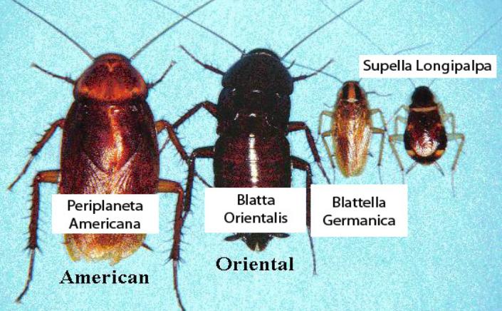 Gândaci