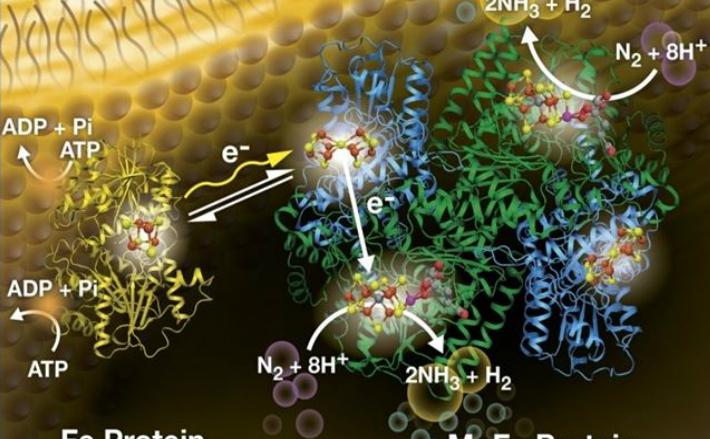 """O ilustrare a unui proces de conversie a azotului în amoniac, cu ajutorul luminii, descris de biochimiştii de la USU şi colaboratorii săi, în 22 aprilie, 2016, în revista """"Science""""."""