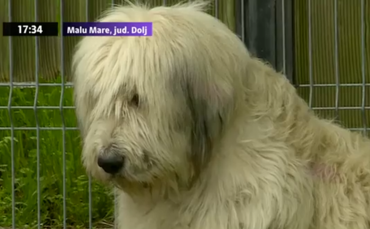 Câinele din Malu Mare, Dolj, care de 5 ani îşi aşteaptă stăpânul.