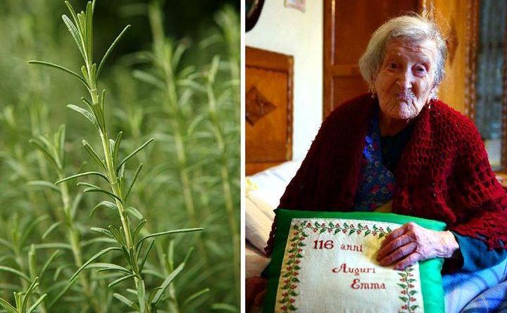 În stânga, planta rozmarin; în dreapta, o femeie care a împlinit vârsta de 116 ani.