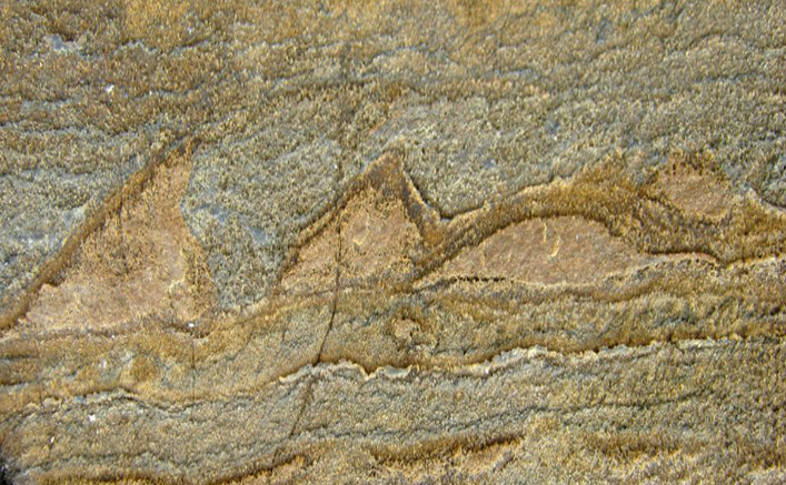 Fosile descoperite în Isua Greenstone Belt, Groenlandia
