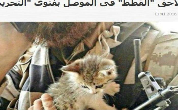 Pe Twitter circulau fotografiile militanţilor cu pisicile