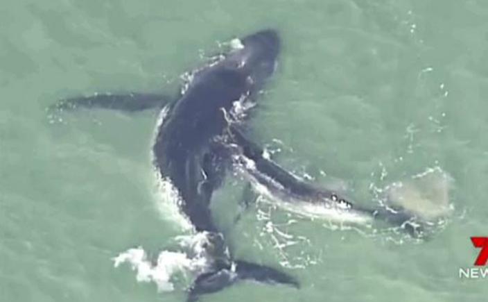 Balena eşuată