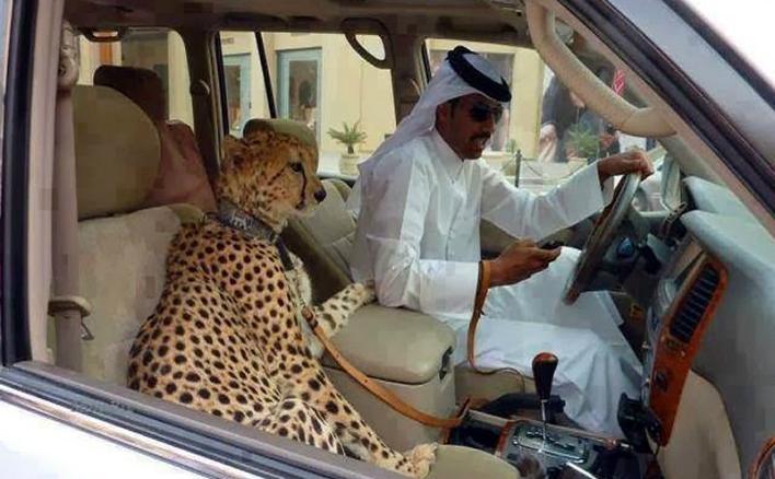 Animal de companie în Emiratele Arabe Unite