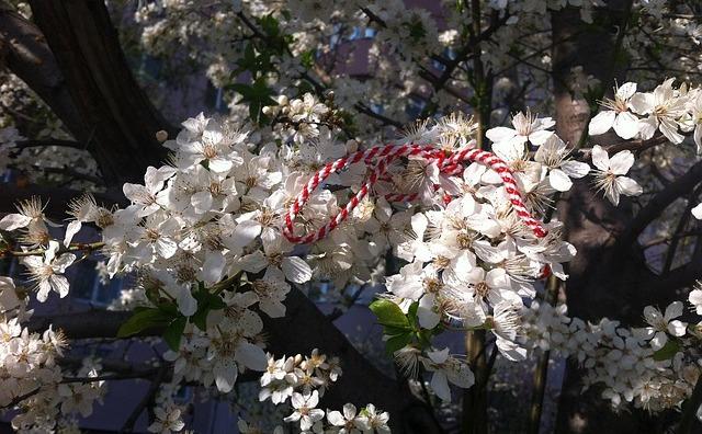 Şnurul de mărţişor legat într-un copac înflorit