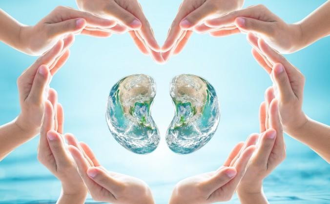 În medicina chineză, rinichii sunt rădăcinile organismului uman.