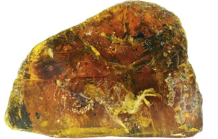 Bucată de chihlimbar veche de 100 milioane de ani