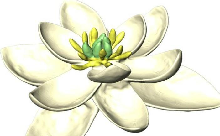 Este aceasta prima floare apărută pe Pământ?