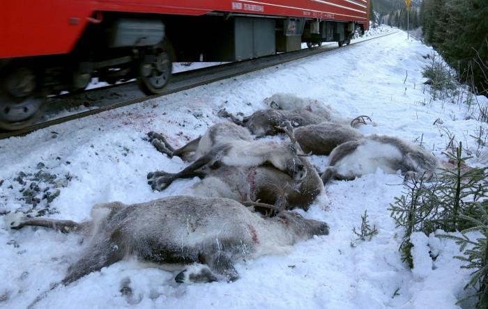 Reni ucişi