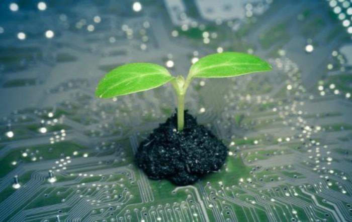 Plantă