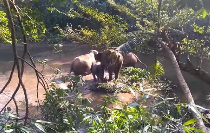 Elefanţi