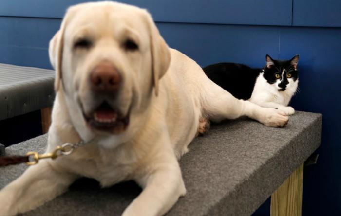 Câinele şi pisica