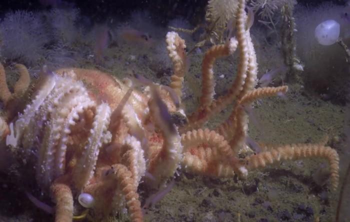 Antarctica: creaturi ciudate descoperite pe fundul mării