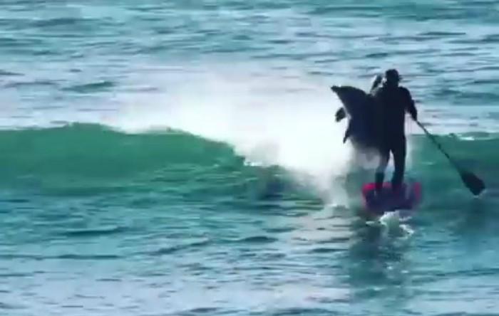 Omul şi delfinul