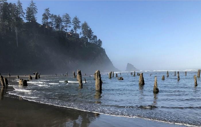 """""""Pădurea fantomă"""", Oregon (SUA)"""
