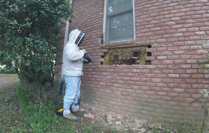 Stup de albine în peretele unei case