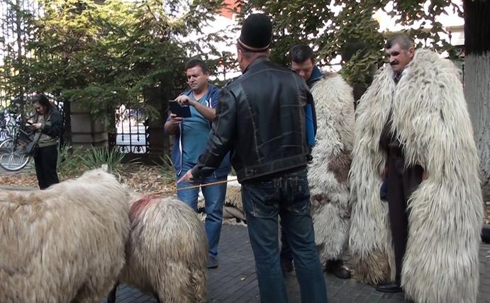Protestul Ciobanilor