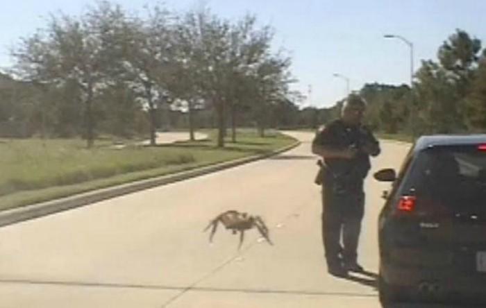 """Păianjen """"gigant"""""""