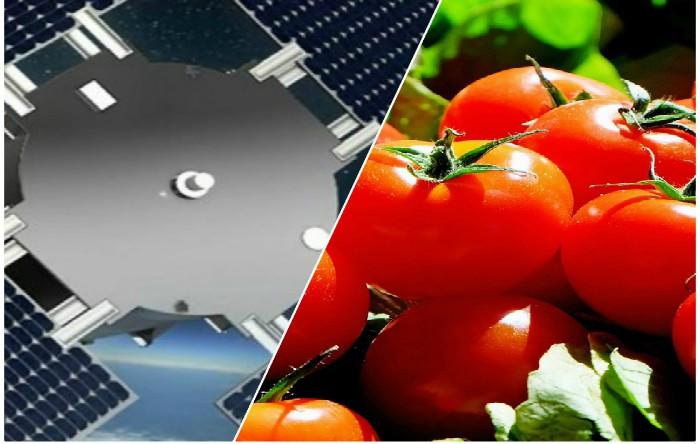 """Scopul misiunii """"Eu:CROPIS"""" (Euglena and Combined Regenerative Organic-Food Production in Space) este de a aproviziona astronauţii cu roşii proaspete şi alte legume în timpul misiunilor îndepărtate."""