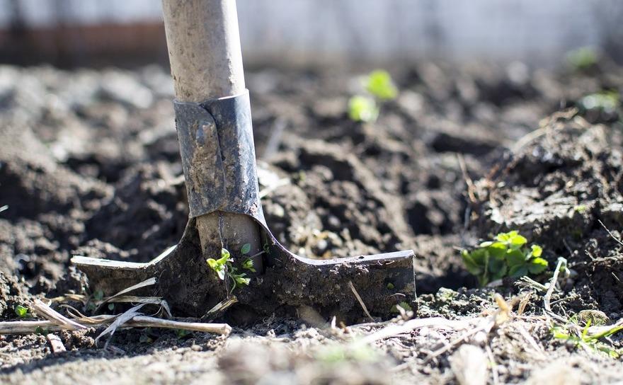 La o scoala din Milano, studenţii indisciplinaţi sunt trimişi să sape pământul în grădina din spatele şcolii.
