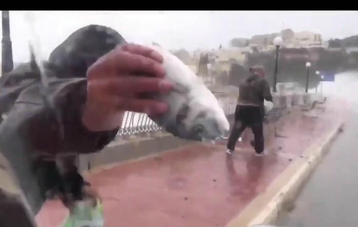 """""""Plouă"""" cu peşti"""