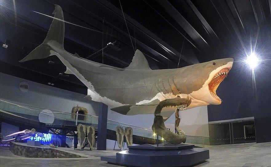 Reprezentarea artistică a unui rechin Megalodon cu lungimea de 16 metri, la Muzeul Evoluţiei din Puebla, Mexic.