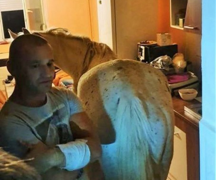 Un cal a fost gasit in bucataria unei garsoniere de la etajul 4 al unui bloc din Satu Mare.