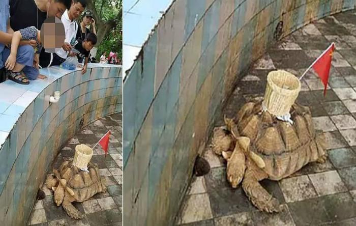 Broască ţestoasă
